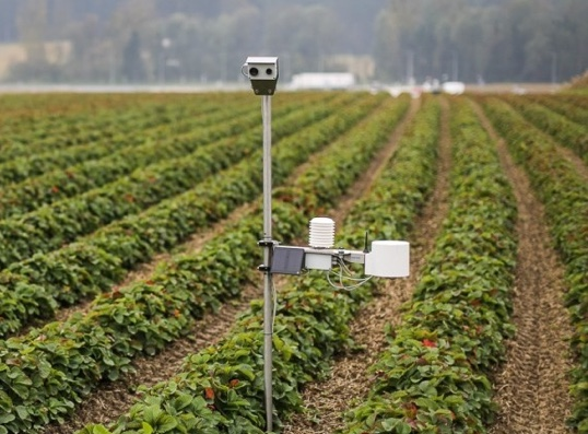CropView System