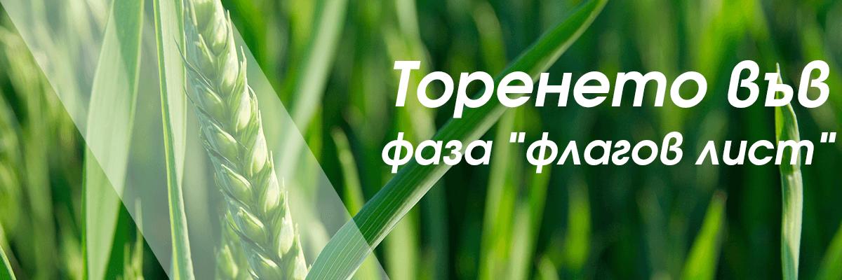 """Ефективно ли е торенето във фаза """"флагов лист"""" при пшеницата?"""